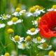 Червень — рум'янець року: прикмети і свята
