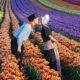 Світові національні бренди: фестиваль тюльпанів у Туреччині
