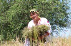 Трав'яні обереги Таїсії Вікол