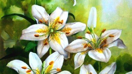 Лілія – друга королева квіткового царства